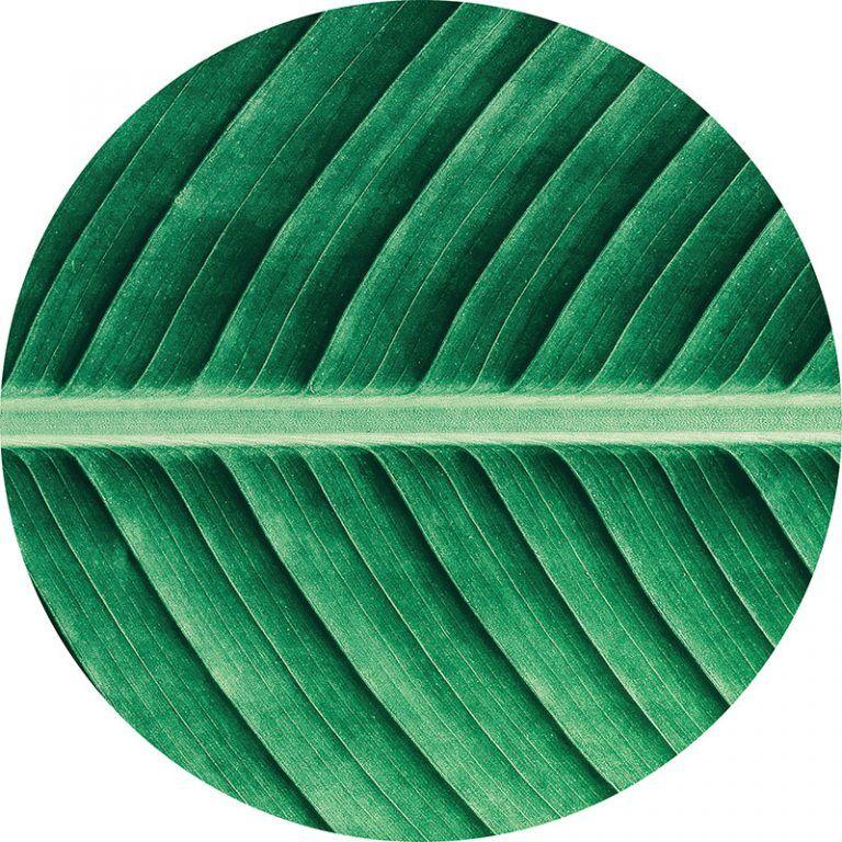 Alfombra Vinílica Redonda Leaf - 60x60 cm