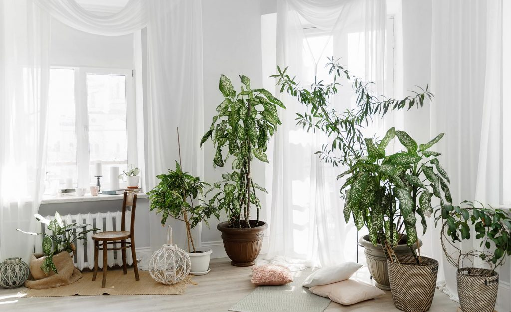 decoración nórdica plantas